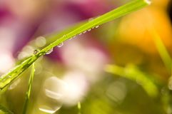 Morning Dew Drops Royalty Free Stock Photos