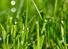Morning dew drops royalty free stock photo