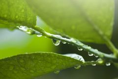 Morning dew drops Royalty Free Stock Images