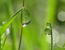 Morning dew drops on grass Stock Image