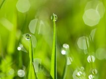 Morning dew drops on the green grass. Closeup of morning dew drops on the green grass stock photography