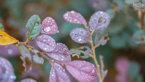 Morning dew. Dew drops in the morning at the park Stock Image