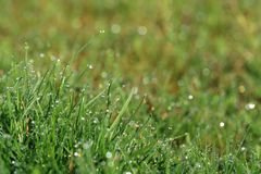 Morning dew drops with rainbow reflections on green blades of grass.  Stock Photos