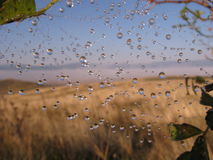 Morning dew Stock Photos