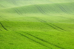 Morning dew on the field waves Stock Photo