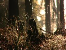 Morning dew in forest grass at sunrise Stock Image