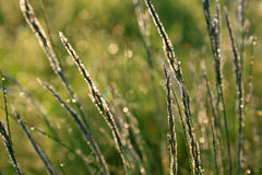 Morning dew on the grass. At spring morning Stock Images