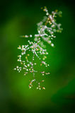 Morning dew on grass Stock Image