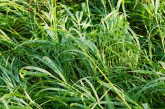 Morning dew on grass Stock Photos