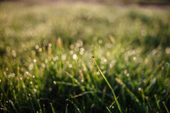 Morning dew on the grass Stock Image