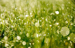Morning dew in grass Stock Image
