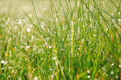 Morning dew in grass Stock Images