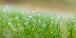 Morning dew at grass. After cold night you wake early and go out.  The beautiful dew in grass take you to your knee Stock Image