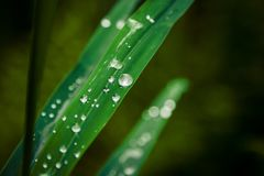 Morning dew on the grass stock images