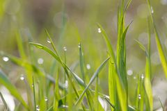 Morning dew on grass. Morning dew on green grass Stock Photography