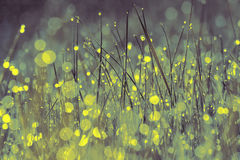 Morning dew on the grass Stock Photography