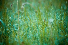 Morning dew on the grass. Spring Floral Background Royalty Free Stock Images