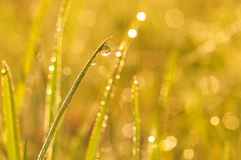 Morning dew on a grass Stock Photography