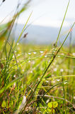 Morning dew on grass. After rain Royalty Free Stock Images