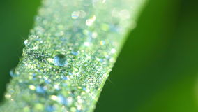 Morning Dew on the Grass. Seamless Looped Stock Photo
