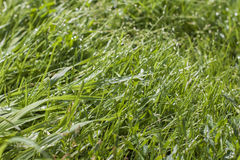 Morning dew on the grass Royalty Free Stock Images