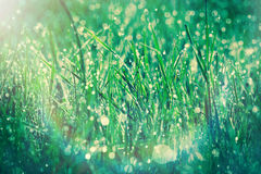 Morning dew on grass in spring Stock Photos