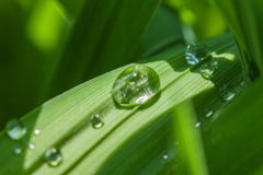 Morning dew. On the grass in the sun Royalty Free Stock Images