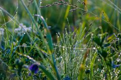 Morning dew on the grass, with threads of web. Stock Images