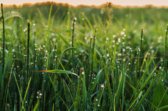 Morning dew on grass under sunrise. Grass with water drops in morning time Stock Image