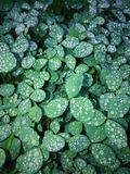 Morning dew. Green,fresh,magnificent morning Royalty Free Stock Photography