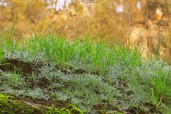 Morning dew on green grass Stock Photo