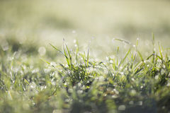 Morning dew on the green grass Royalty Free Stock Photography