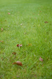 Morning Dew on Green Grass Stock Images