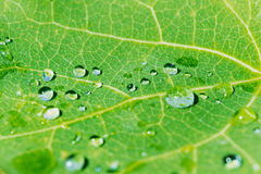 Morning dew on green leaf background Royalty Free Stock Photos