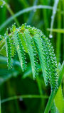 Morning dew on green leaf Stock Photography