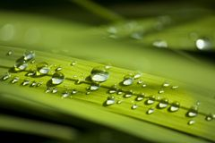 Green leaves and drops, dewdrops, hd drops, textures royalty free stock photo