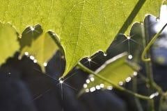 Morning dew stock image