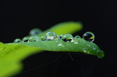Morning dew on leaf Royalty Free Stock Photos