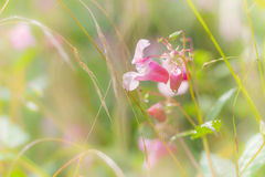 Morning dew on the meadow flower Stock Image
