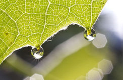 Morning dew stock images
