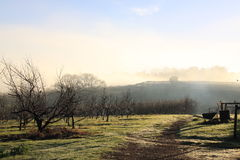 Morning dew over farm in Manjimup, Australia Royalty Free Stock Photos