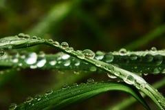 Morning dew of safflower Stock Photos