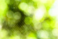 Morning dew. Shining water drops on spider web over green forest background. soft focus image. Shallow depth of field. Green nature bokeh background with copy Royalty Free Stock Photos