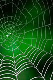 Morning dew. Shining water drops on spiderweb Royalty Free Stock Image