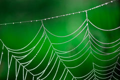 Morning dew. Shining water drops on spiderweb Stock Photo