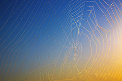 Morning dew. Shining water drops on spiderweb Royalty Free Stock Photo