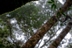 Morning dew. Shining water drops on spiderweb over green forest Stock Photography