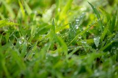 Morning dew soaked the fresh green grass that was exposed to the orange morning sun royalty free stock image