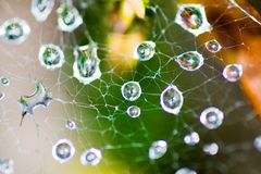 Morning dew on spider web Stock Photos