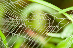 Morning Dew. On spider web Royalty Free Stock Image